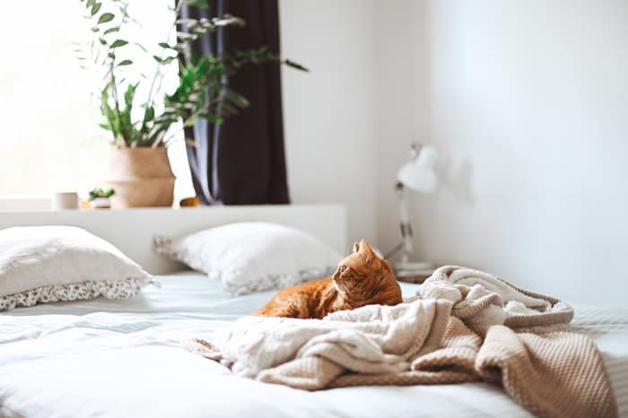 Are Baking Soda and Vinegar Effective for Mattress cleaning